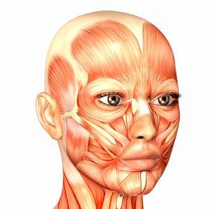 Intro Botox Training Glabella